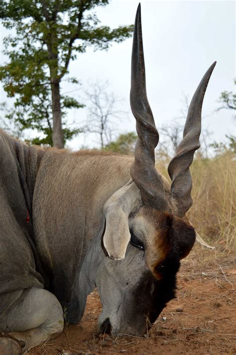 chasse Namibie voyage expédition safari hunting chasse et